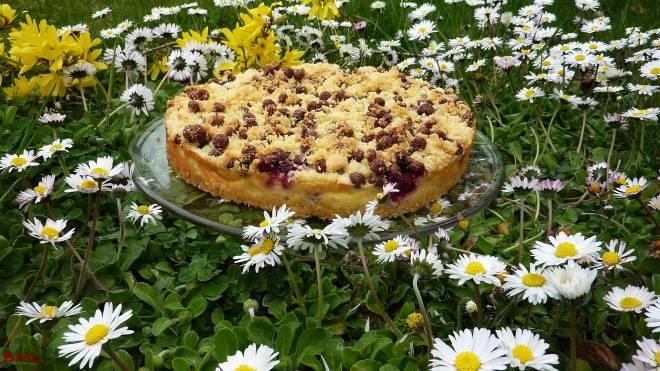 Quarkstreuselkuchen (9)
