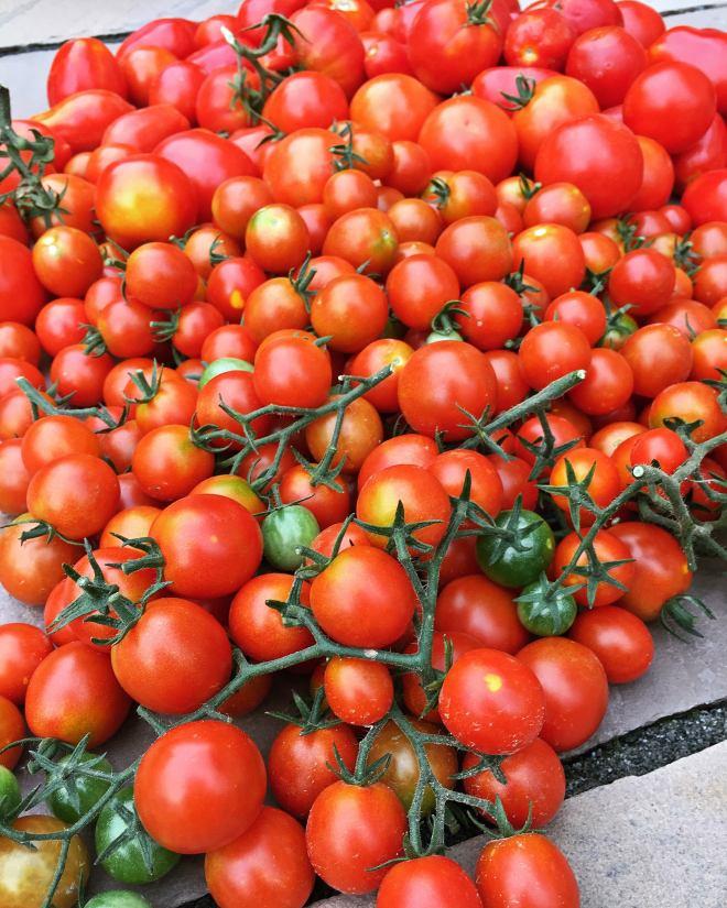 Tomatentarte (6)